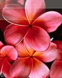 128x160 flower dw1wmz8j