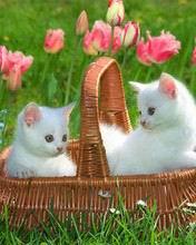 176x220 lovelycats mvl8c94c